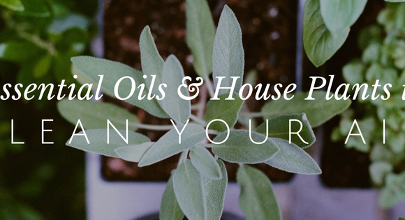 8 Plants and Essential Oils that Clean the Air