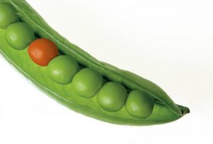 Why Sugar And Inflammation Are Like Two Peas In A Pod